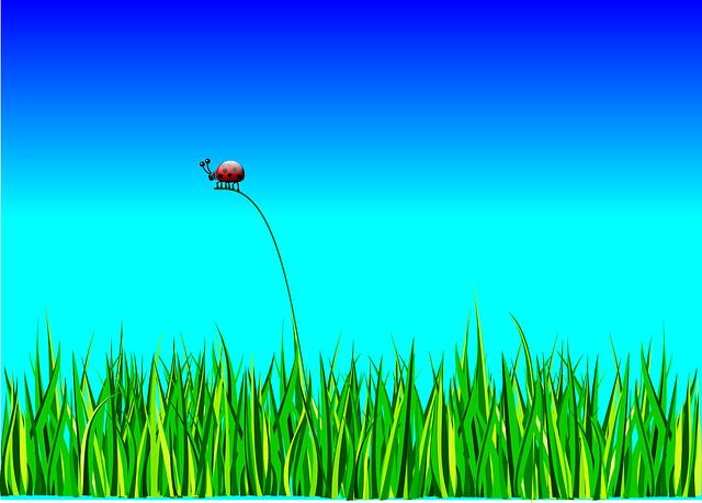 ladybug-158326_640
